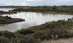 Thompson Beach South Australia Tide